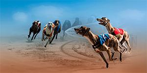 Virtual Greyhound
