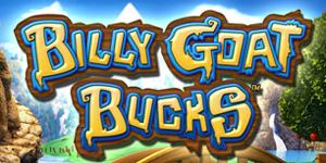 Blly Goat Bucks